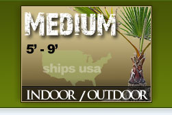 Medium Palm Trees Catalog
