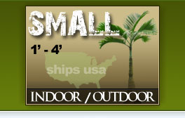 Small Palm Trees Catalog