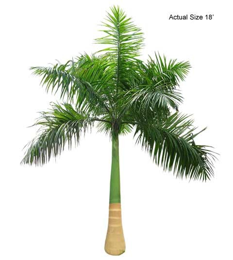 Large Cuban Royal Palm Tree