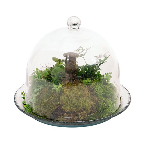 Glass Cloche Bell Jar Terrarium3 - Bell Jar Garden Supplies