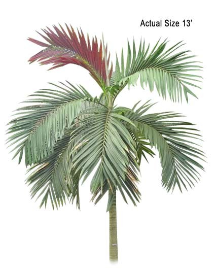 Large Flame Thrower Palm Tree