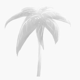 Flamethrower Palm Seeds: 10 Pack, Flamethrower Palm Seeds - web