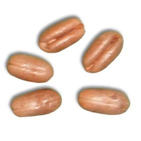 Senegal Date Palm Seeds