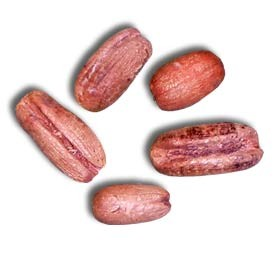 Sylvester Date Palm Seeds