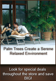Great deals you purchase 2 or more palm trees or products.